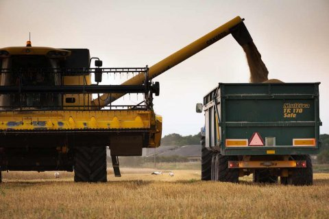 Combine harvesters on a field.